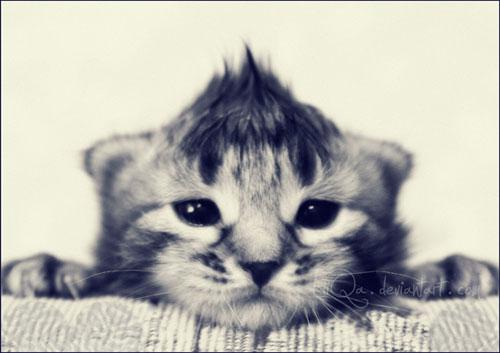 cute kitty Born to be Rocker photography