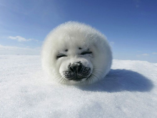 cute seal photography