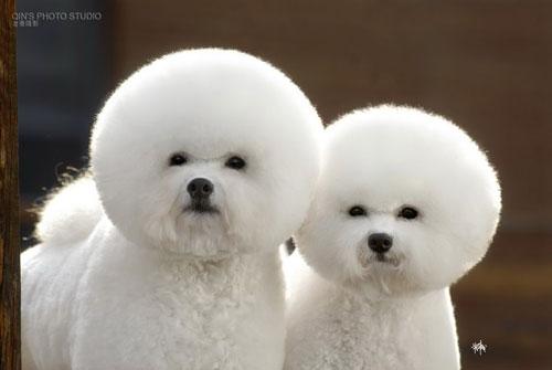 cute animal photography