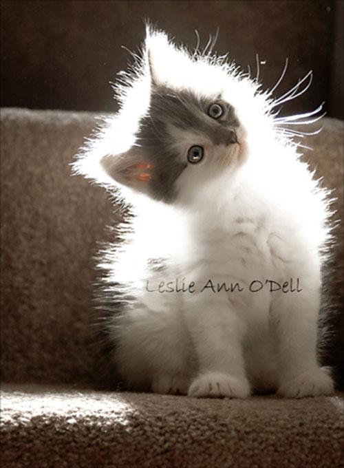 cute kitten in light photography