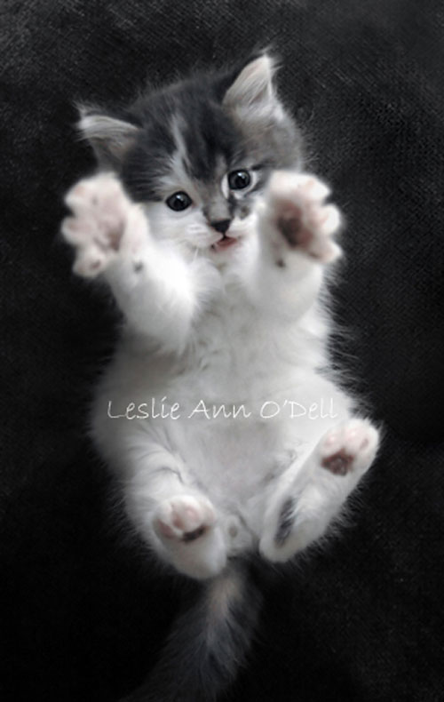 cute kitty Affection photography