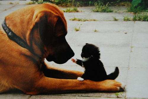 cute cat and dog photography