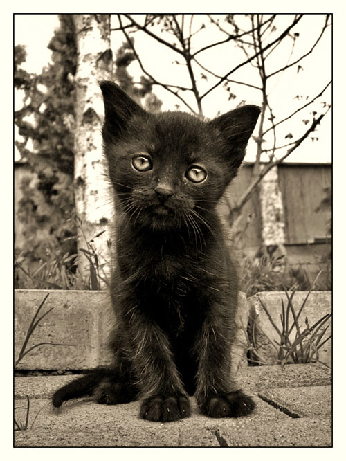 cute black kitty photography
