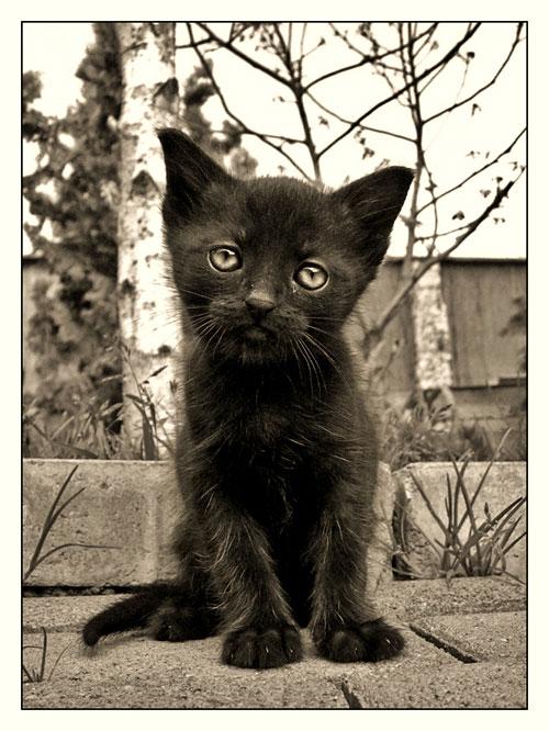 cute black kitty photography