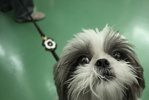 cute big eyes dog photography
