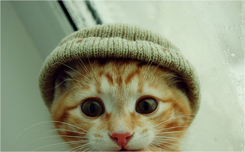 cute gangster cat photography