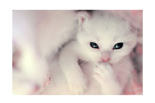 cute white kitty photography
