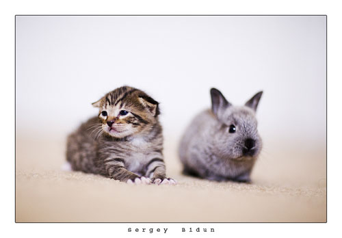 cute cat and bunny photography