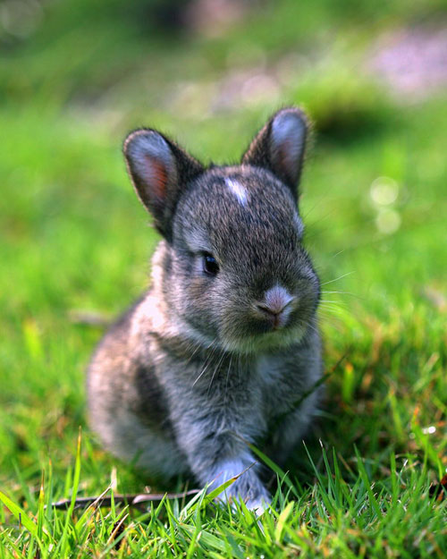 cute bunny in grass photography