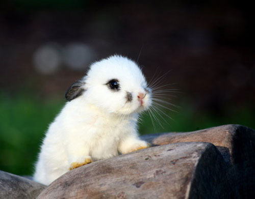 cute furry rabbit kitty photography