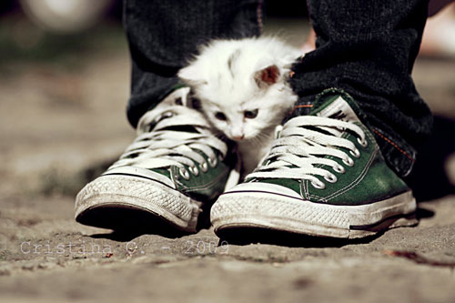 cute all star cat photography