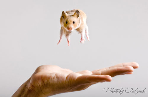 cute mouse photography