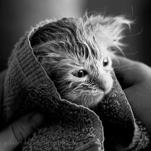 cute yoda cat photography