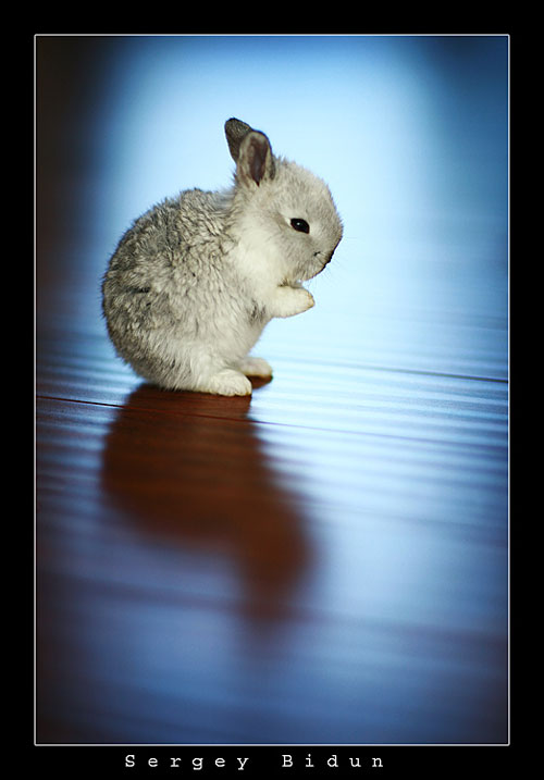 cute little bunny kitty photography
