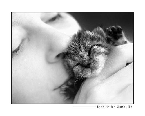 cute foster kitten baby photography