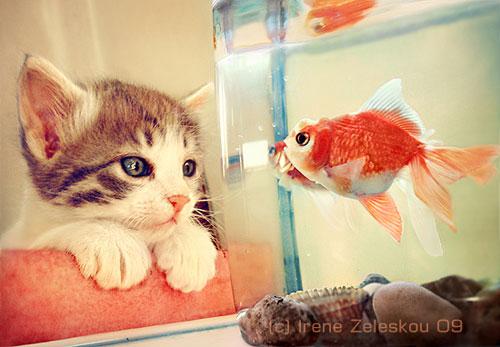 cute hello kitty photography