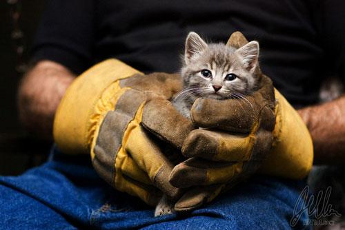 cute gray cat photography