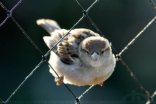 cute sparrow photography