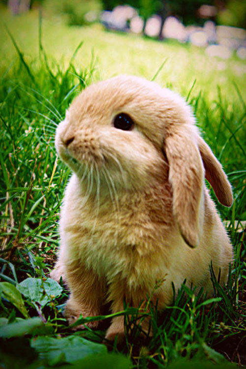 cute fluffy bunny rabbit photography