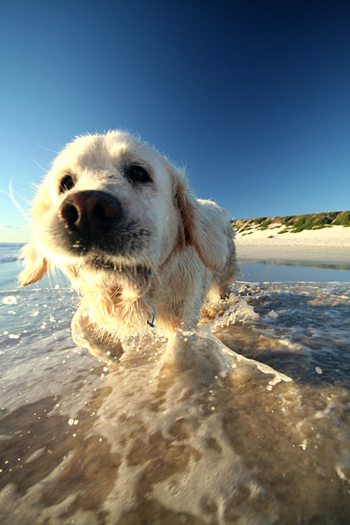 cute white puppy photography