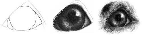 Detailed Dog Eye tutorial