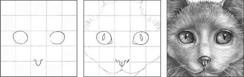 Kitty tutorial