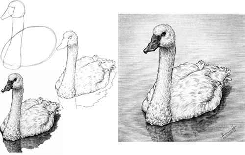 Swan tutorial