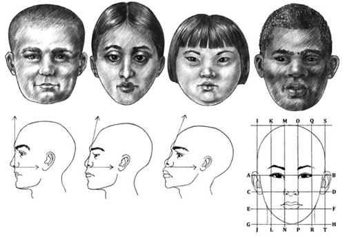 Adult Facial Proportions tutorial