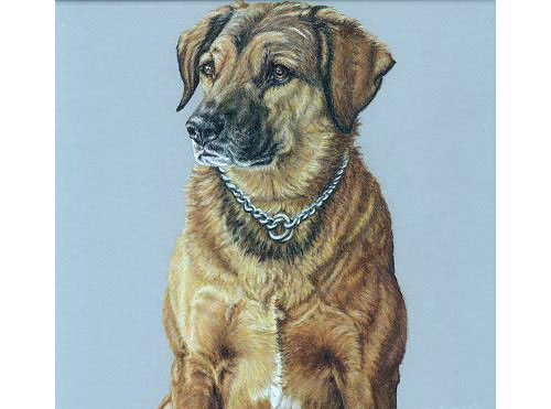 Dog portrait tutorial