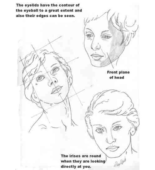 Wetcanvas anatomy less2 the best drawing tutorials learn how to draw