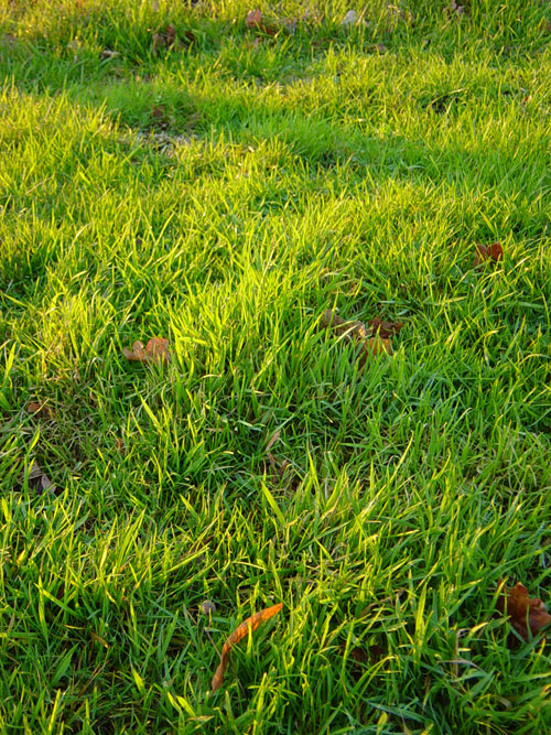 Grass by ~dgstock - Free grass textures ready to download