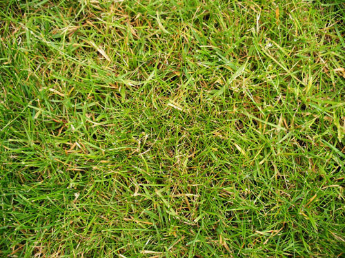 Grass Moss And Foliage 1 - Free grass textures ready to download