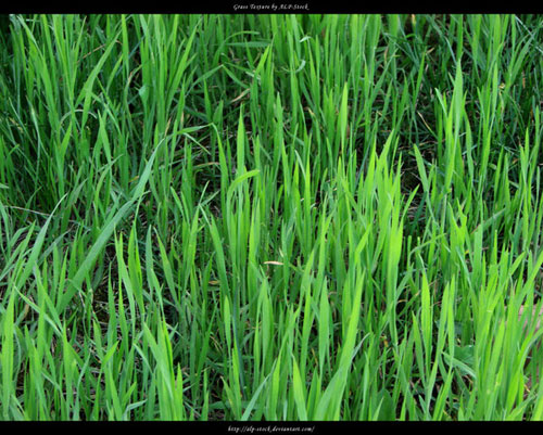Grass Texture by ~ALP-Stock - Free grass textures ready to download