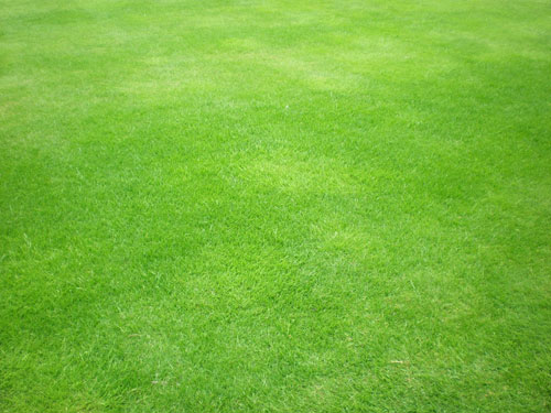 Green grass by ~Gardek - Free grass textures ready to download