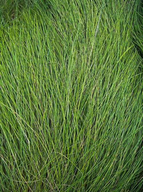 Long Grass - Texture by ~Starna - Free grass textures ready to download