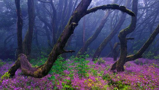 La selva encantada Photography