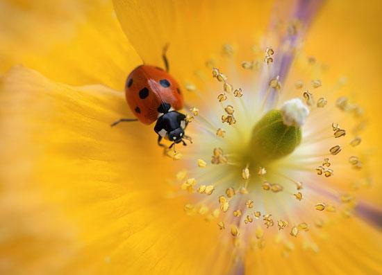 Poppy lady Photography