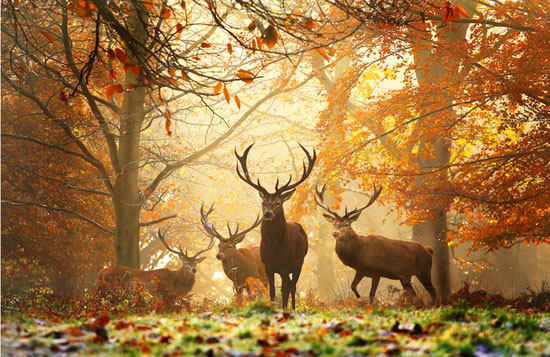 Realm of the Deer Photography