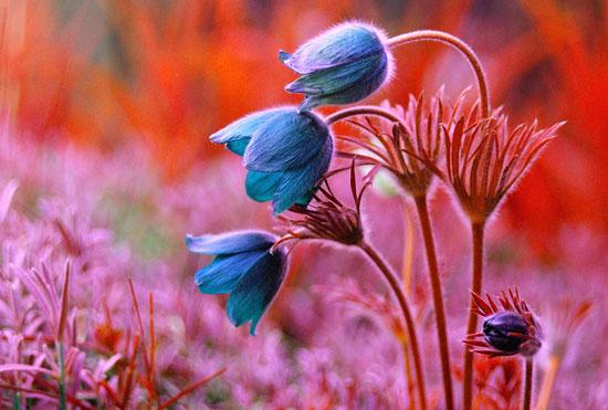 Spring fantasy Photography