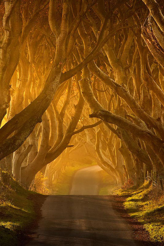 The Dark Hedges Beautiful Landscape Photography