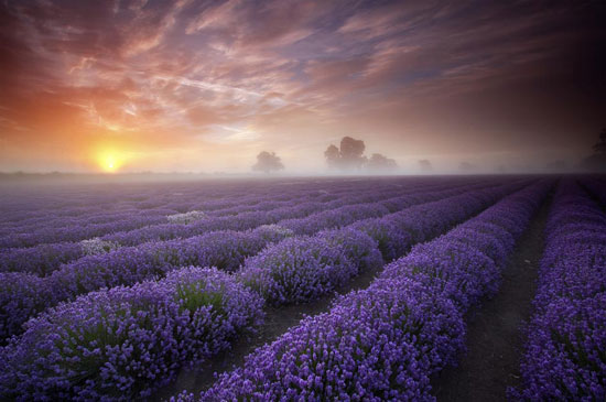 Lavender Sunrise Beautiful Landscape Photography