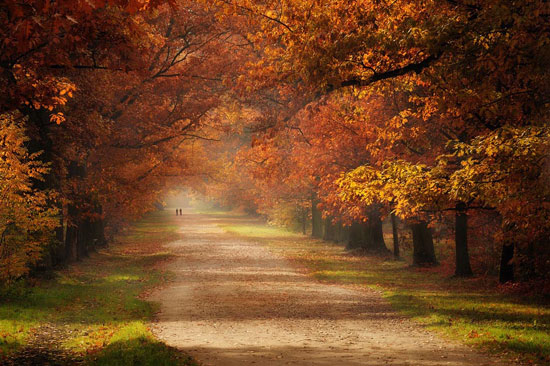 Autumn Beautiful Landscape Photography