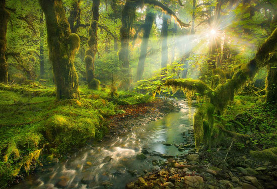 Spirit Garden Beautiful Landscape Photography