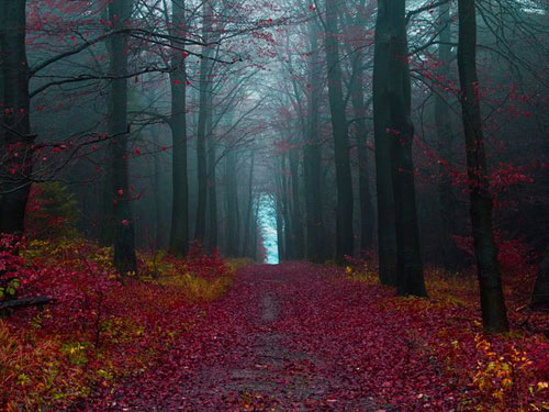 Autumn Woods, Germany  Photography