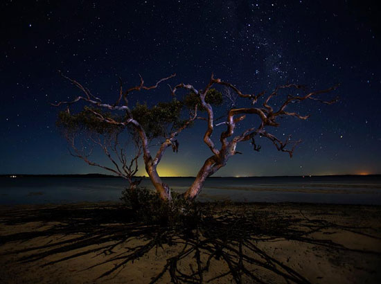 The tree Night Photography