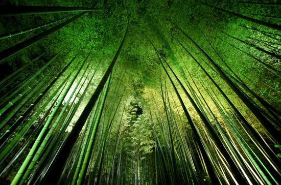 Bamboo night Photography