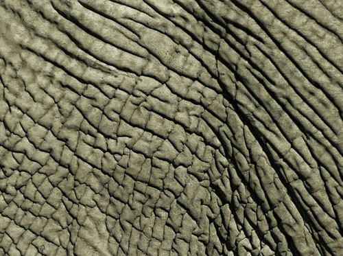 animal patterns in nature - photo #17