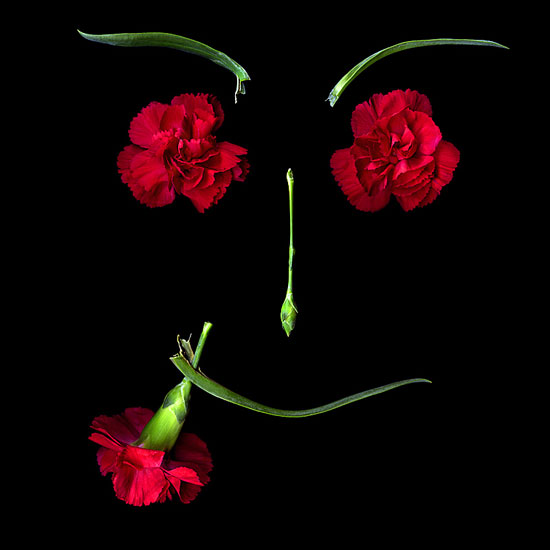 A FLOWER GIFT FOR YOU - Art of Still life photography