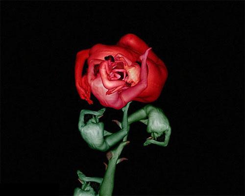 Human flowers by Cecelia Webber 2