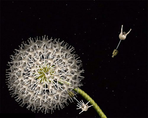 Human flowers by Cecelia Webber 3